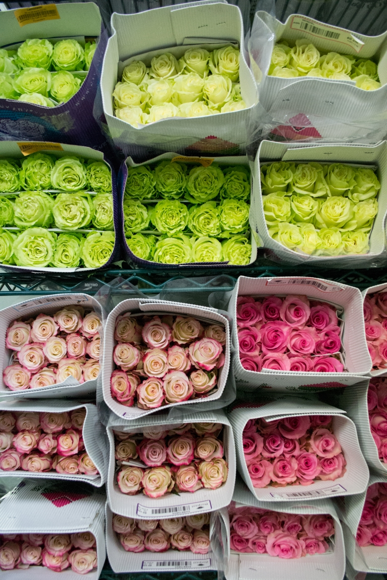 Roses at Empire Cut Flower.